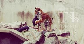 zoo jeans vaqueros tigres leones osos (7)