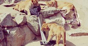 zoo jeans vaqueros tigres leones osos (8)