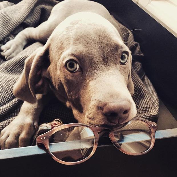 Gafas de sol Lord Wildmore