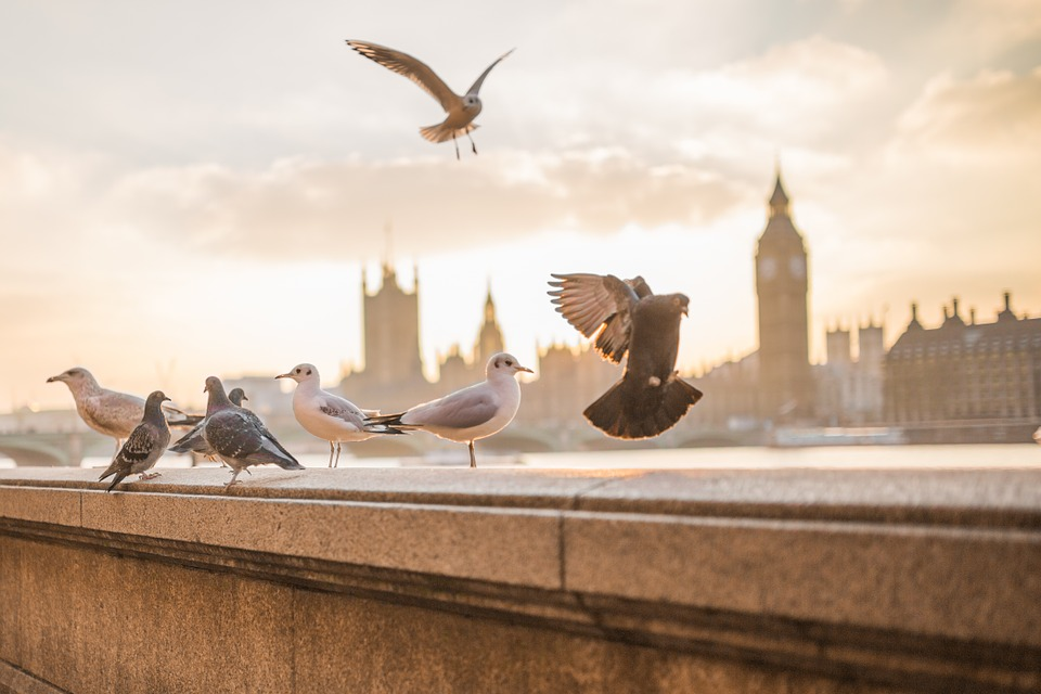 endroits que vous ne pouvez pas manquer à Londres