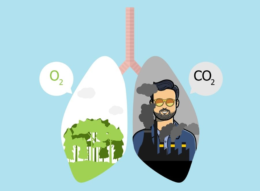 CO2 compensé du blog