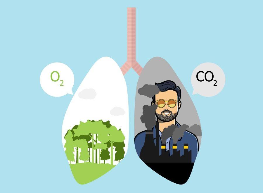 compensar el CO2 del blog