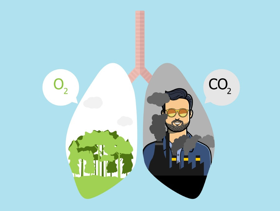 CO2 offset of the blog