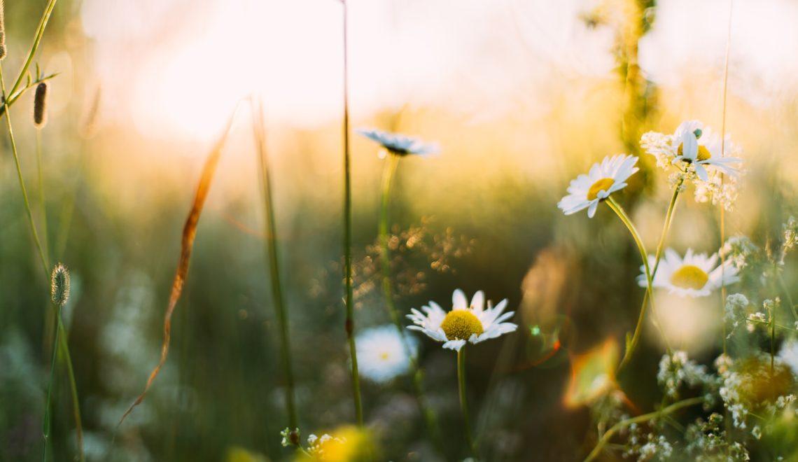 Es una cita ineludible que nos deja flojos y un poco desganados pero podemos reducir o evitar algunos de sus efectos con estos consejos contra la astenia primaveral.